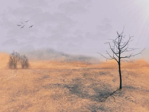 1004 – Mein Freund der Baum