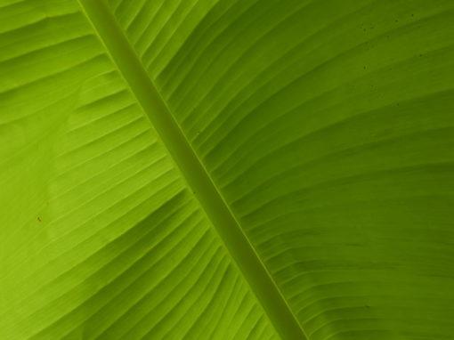 2024 – Grünes Blatt