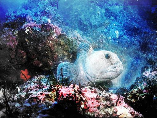 1063 – Fisch